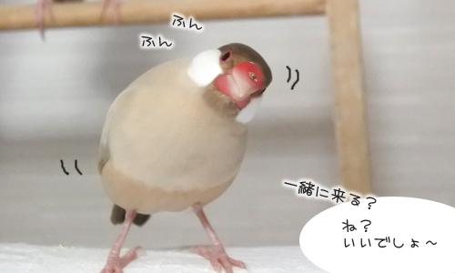 ちゃちゃ受難の日_2