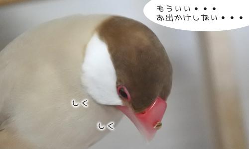 ちゃちゃ受難の日_4