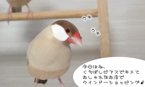 ちゃちゃ受難の日_1