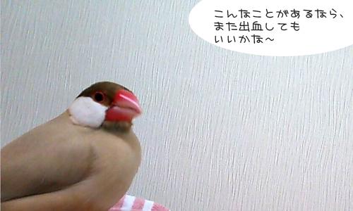 しあせな朝_4