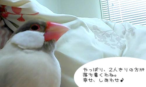 しあせな朝_5