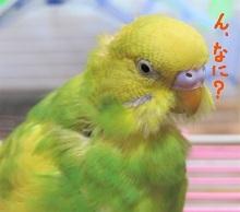 InkedIMG_3546_LI.jpg
