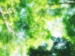 フリー写真(木漏れ日)
