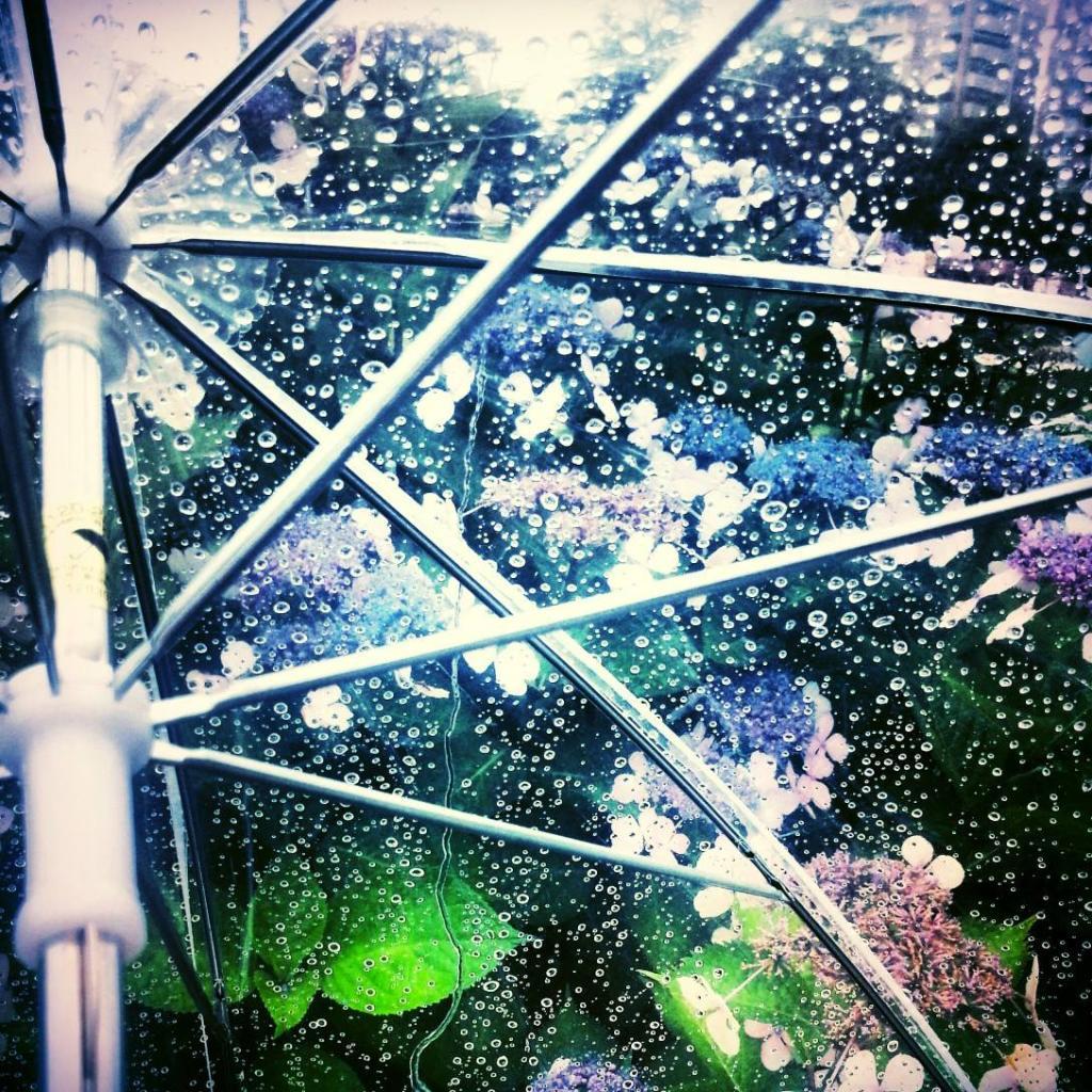 フリー写真 ビニール傘