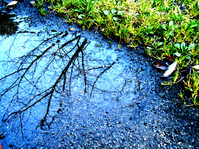 フリー写真 雨
