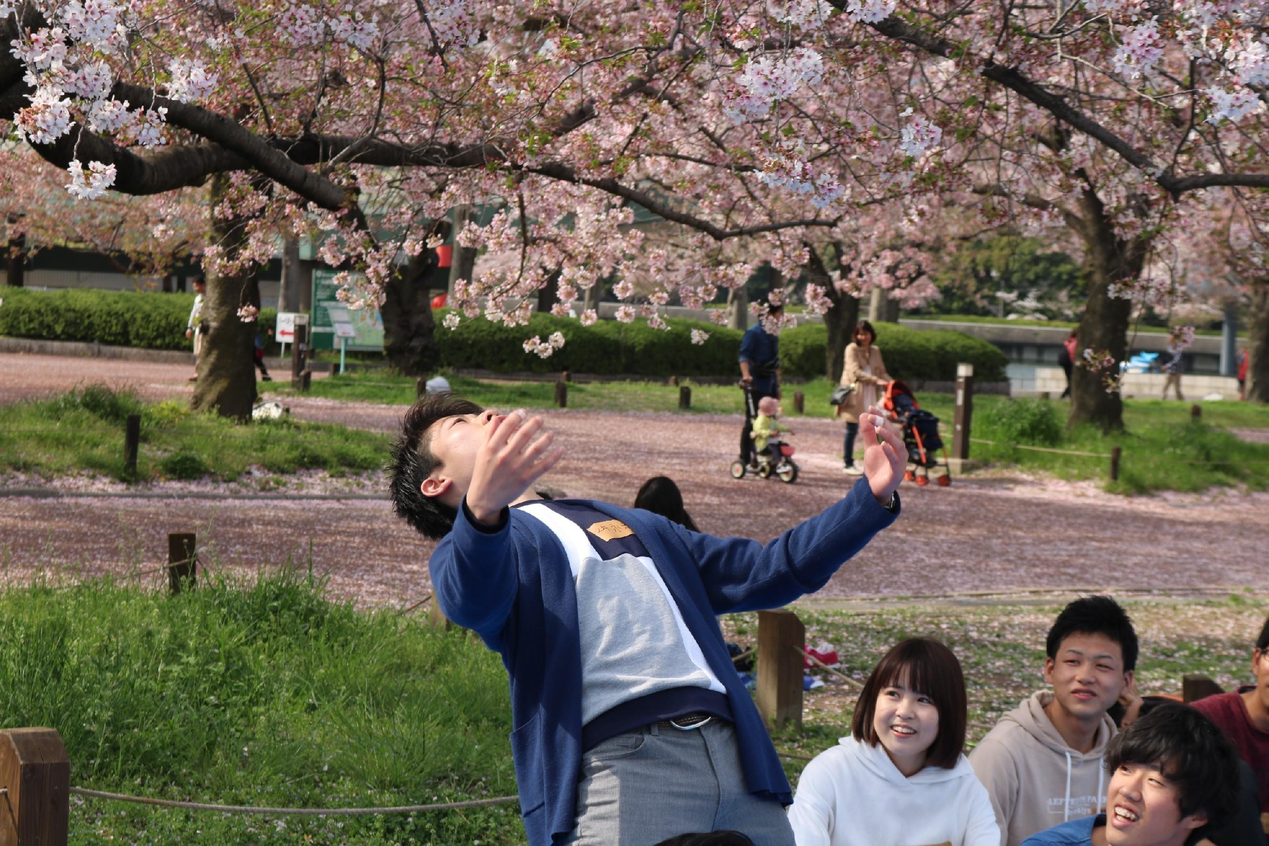 新歓花見2017_2