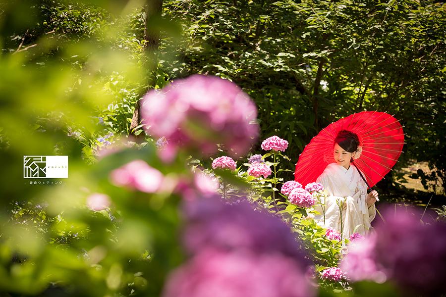 鎌倉紫陽花和装前撮り縁05
