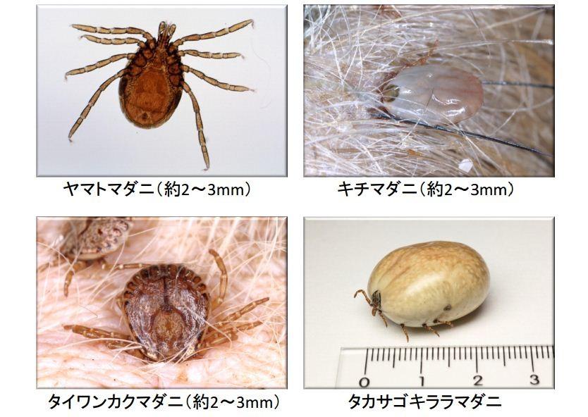 x m 危険な吸血害虫「マダニ」