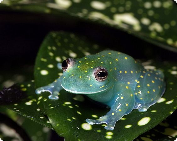 zz zf 木の葉に擬態するカエルa-3