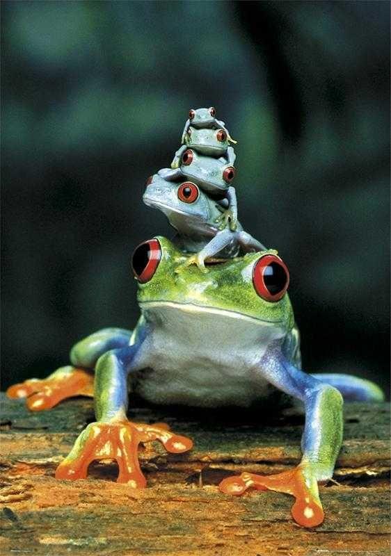 zz zf 木の葉に擬態するカエルa