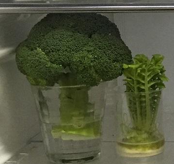 野菜の収納②