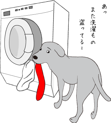 洗濯機とラブラドール