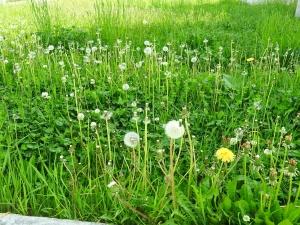 北海道は春…いや、夏か。