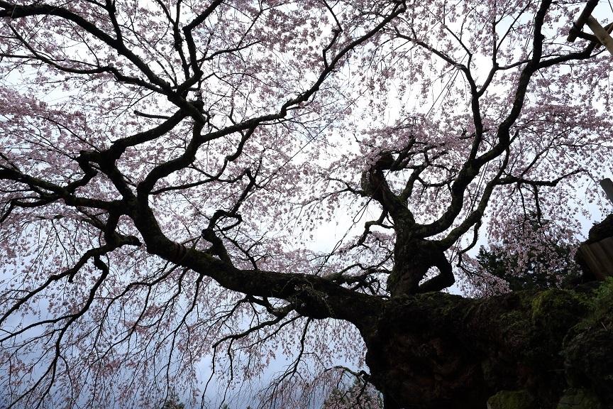 瀧蔵神社、1
