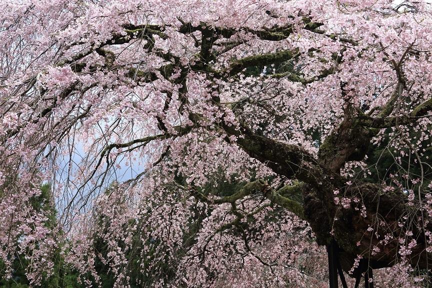 瀧蔵神社、2