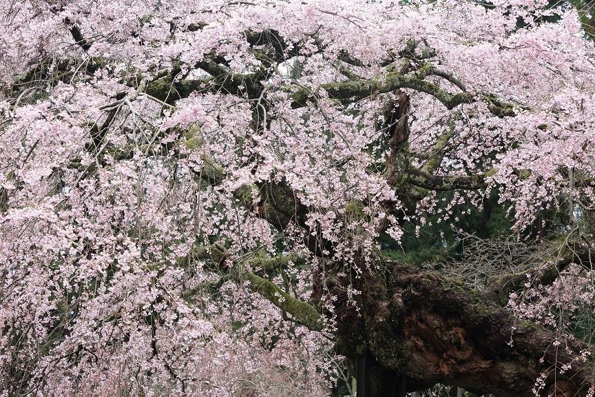 瀧蔵神社、3