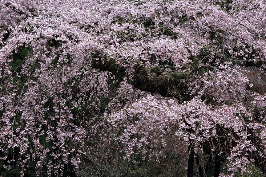 瀧蔵神社、4