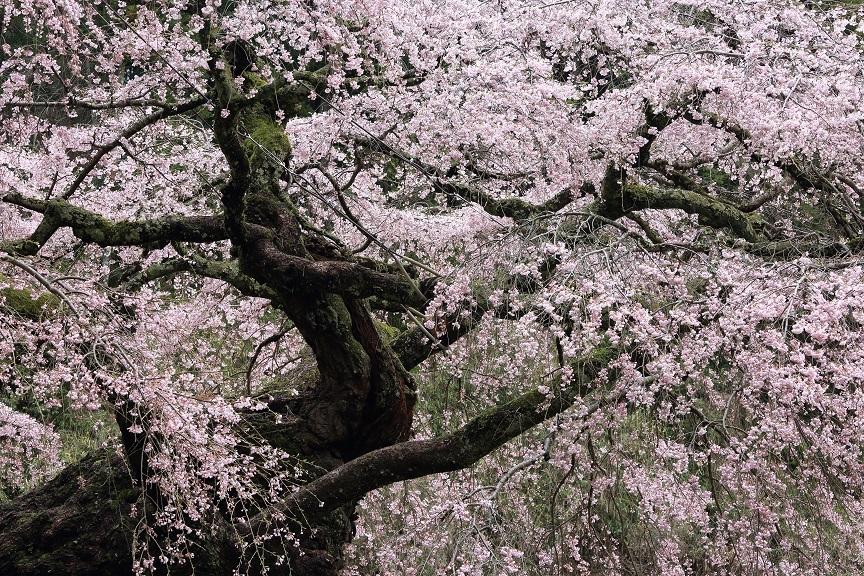 瀧蔵神社、6