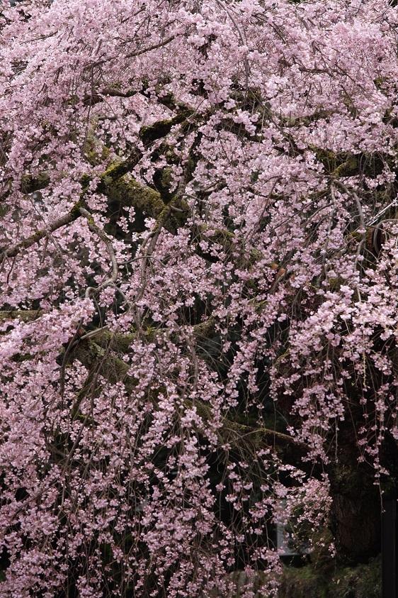 瀧蔵神社、9