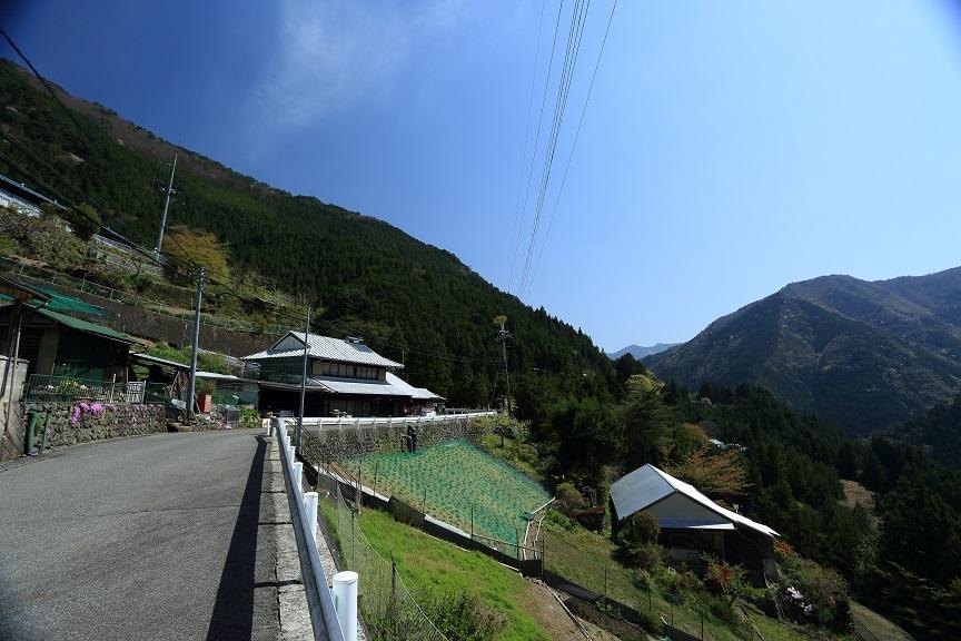 山桜、12