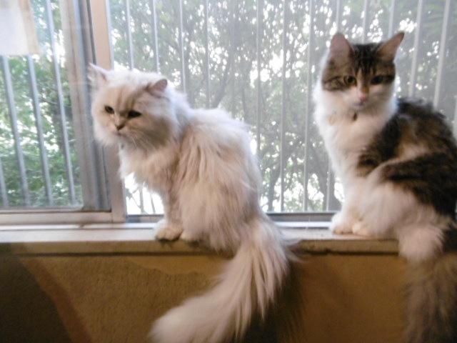 窓際のナナとマリー