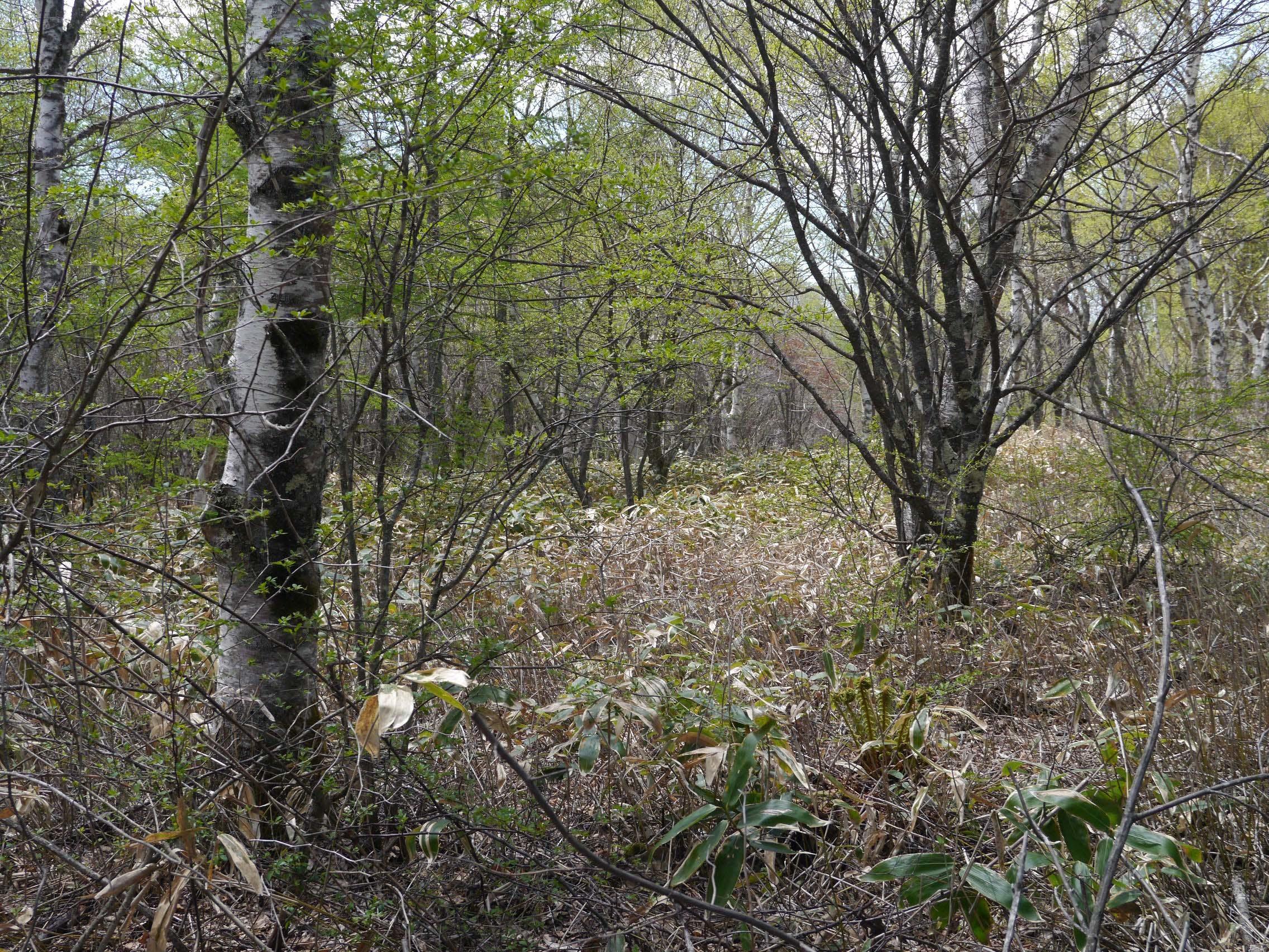 蓼科の森_170519