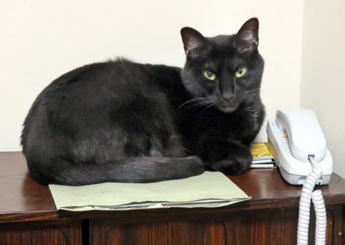 茶箪笥の上の猫
