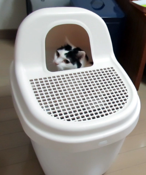 トイレの中のちっぷ
