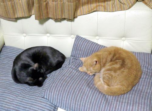 寝ている二匹