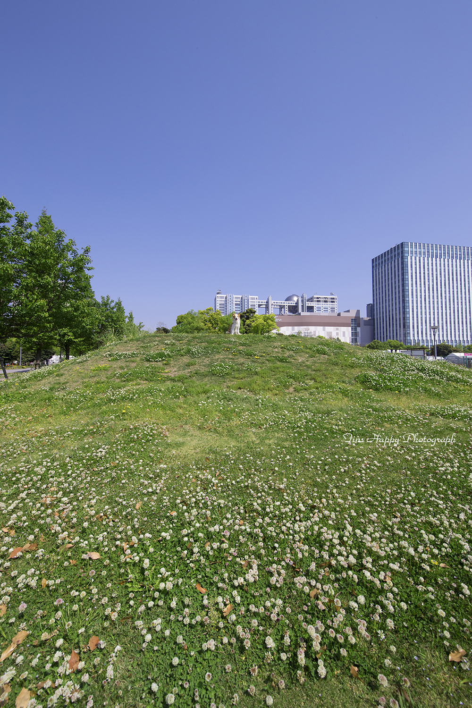 シロツメ草の丘