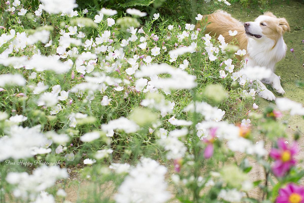 紋白蝶の様な花
