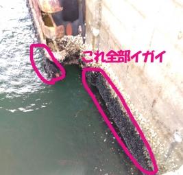 ガンクロ釣り02