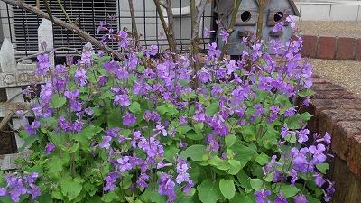 s-紫の花