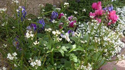 s-春の草花②