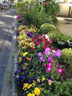 s-花季節の