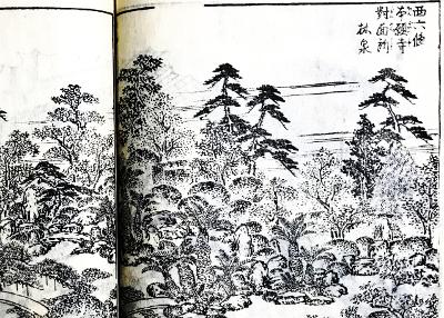 西本願寺対面所の蘇鉄
