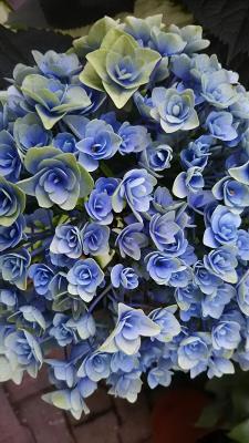 moblog_94315bd2.jpg