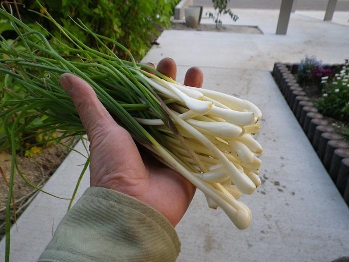 収穫4_17_05_02