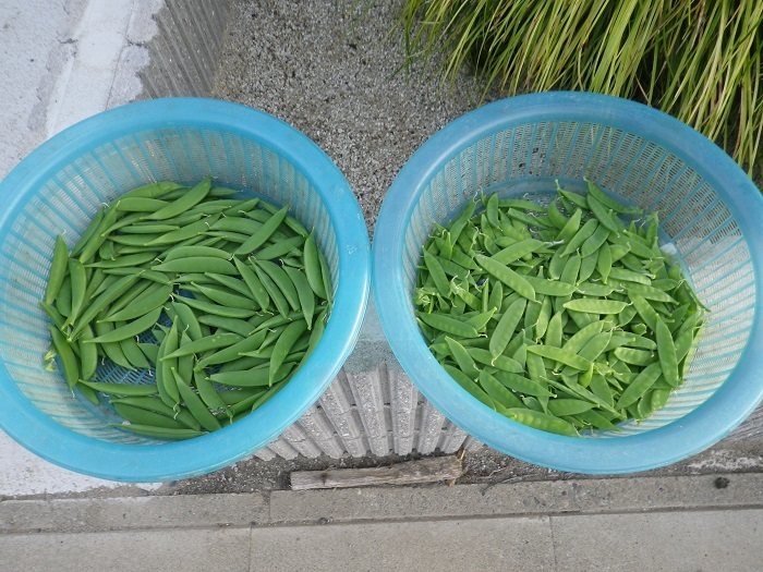 収穫1_17_05_07