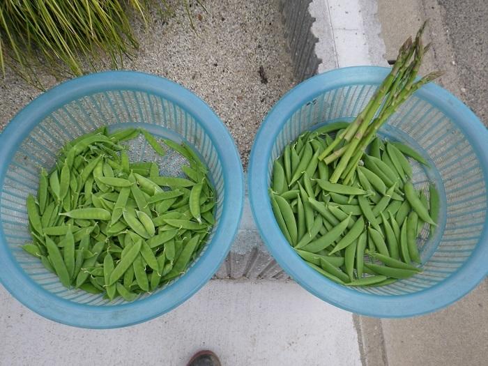収穫1_17_05_09
