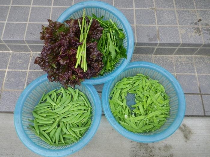収穫1_17_05_10