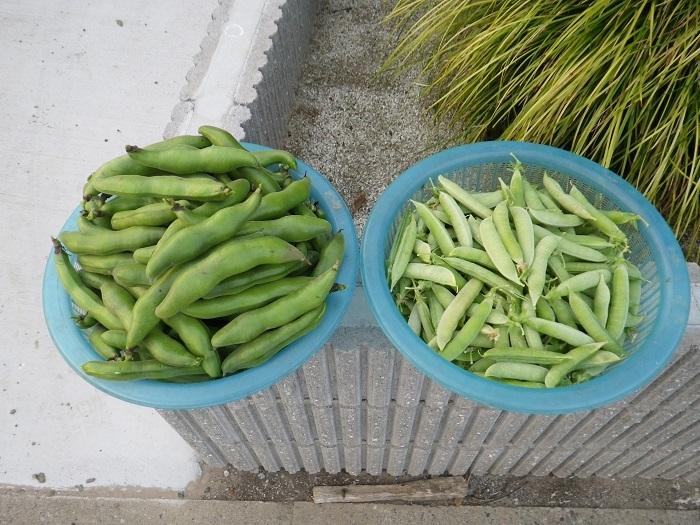 収穫2_17_05_14