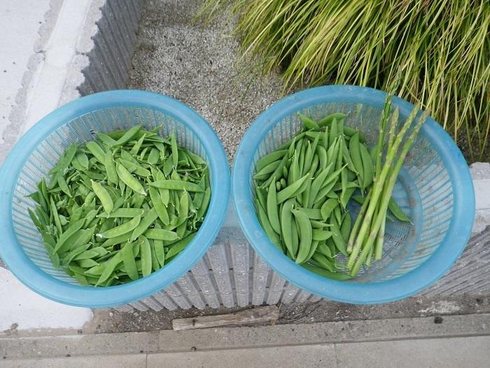 収穫3_17_04_14
