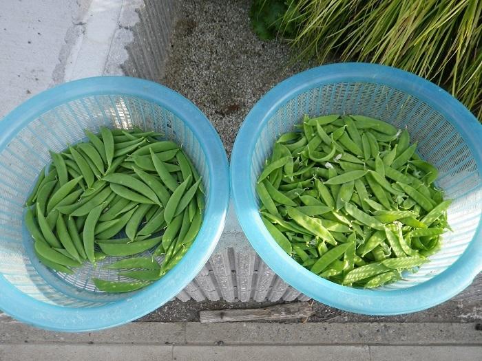 収穫1_17_05_17