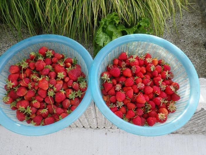 収穫2_17_05_17
