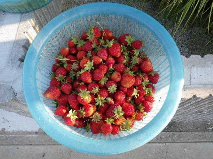 収穫2_17_05_18