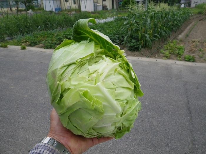 収穫2_17_06_07