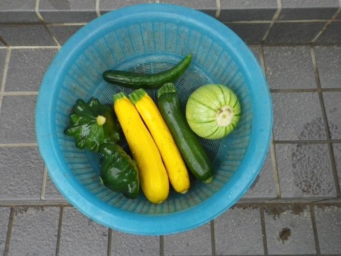収穫17_06_08