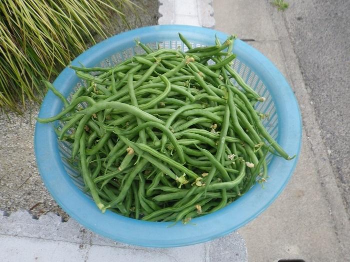 収穫2_17_06_18