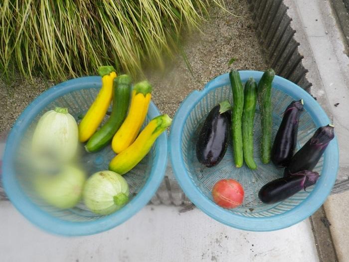 収穫17_07_01